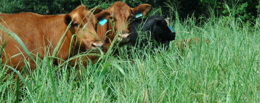 2021 Advanced Grazing School Ranching for Profit