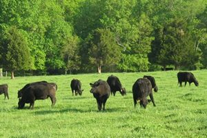 2022 Winter Forage Conference. The Green Side of Beef: In Defense of Grassland Agriculture.