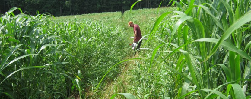 VFGC Summer Pasture Walk: August 28th at 5 PM at Dragonfly Farms