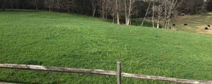 Summer Pasture Walk – Twilight Farms