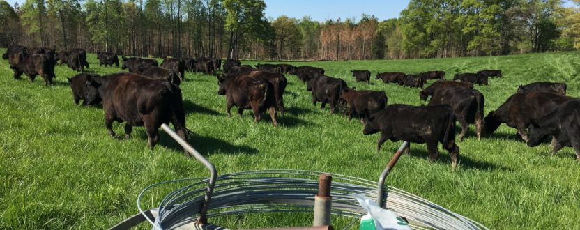 Pasture Walk at Adams Family Farm in Red Oak, Virginia