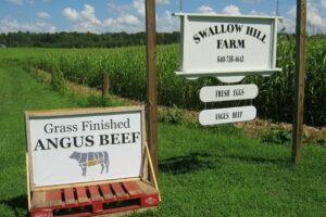 Summer Pasture Walk – Swallow Hill Farm