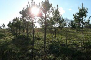 Holsinger Field Day